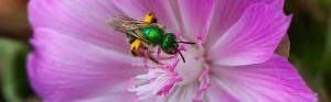Botany BC @ Rossland, Pend D'Oreille