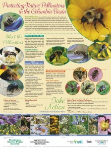 POSTER_NativePollinators_KNPS_96.584px