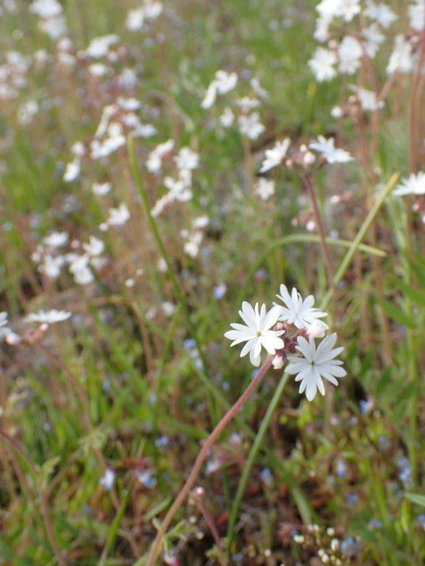 Gilpin Grasslands Superbloom